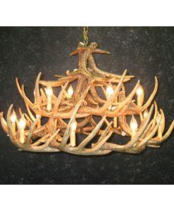 Whitetail 24 Antler Chandelier